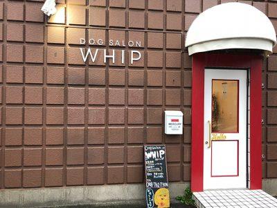 whip640.1